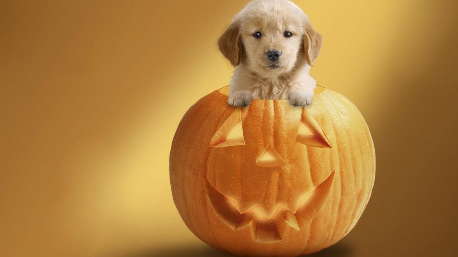 Halloween_Puppy_1920-dusicky-obrazky-na-plochu-psik-dyna