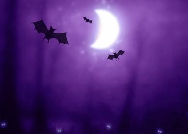 halloween_bats-2560x1600-dusicky-obrazky-na-plochu