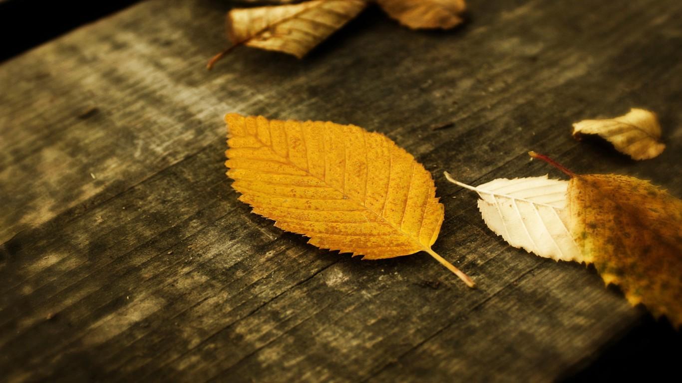 listy-jesen-obrazky-na-plochu