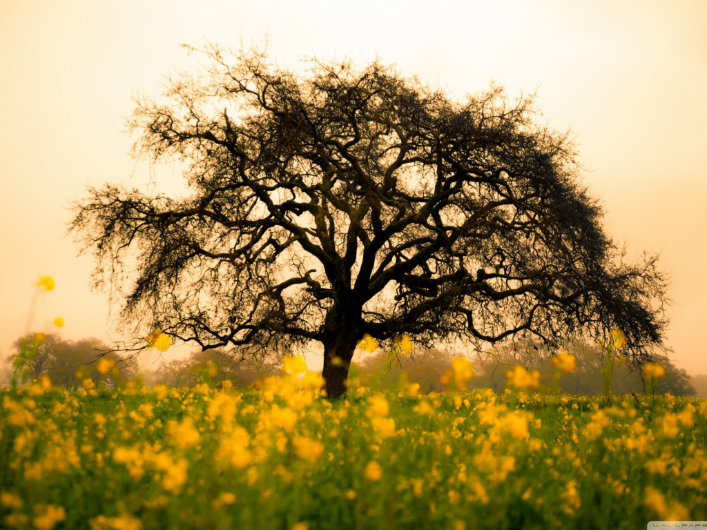 spring_field-wallpaper-2560×1600
