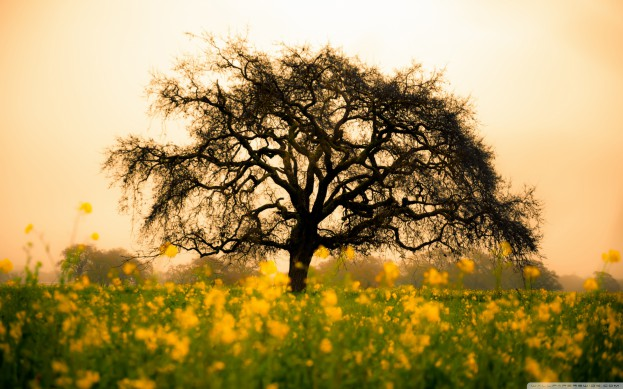 spring_field-wallpaper-2560x1600