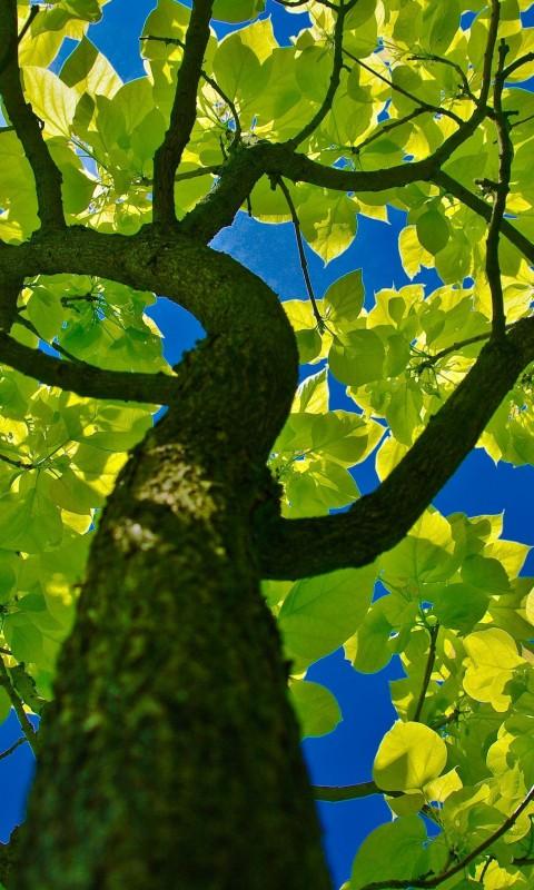 tree_crown-wallpaper-2560×1600